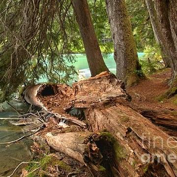Garibaldi Provincial Park - Cheakamus Lake Area - British Columbia Collection