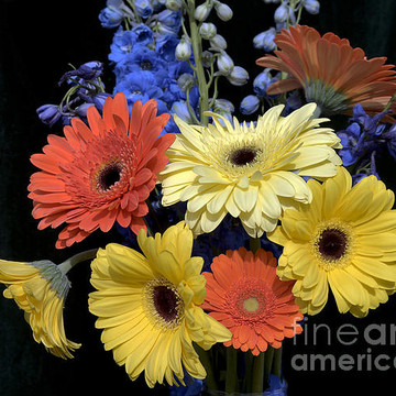 Gerbera Flowers Collection