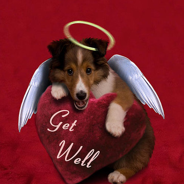 Get Well Greeting Cards Collection
