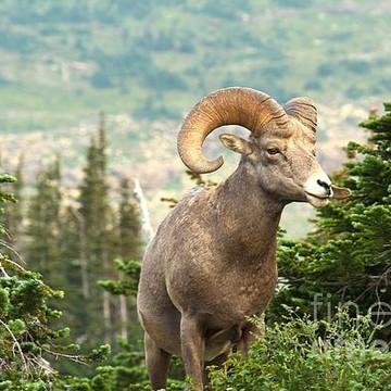 Glacier National Park - Logan Pass Area Collection