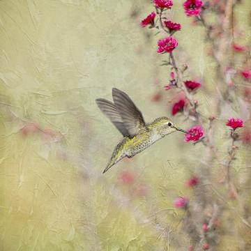 Glorious Hummingbirds