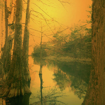Golden Toned landscape with water Collection