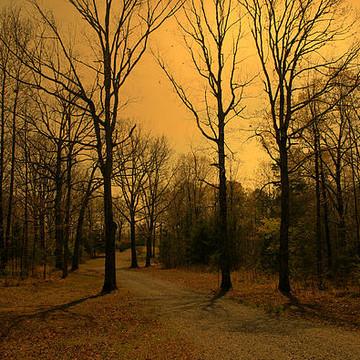 Golden Toned Landscapes Collection