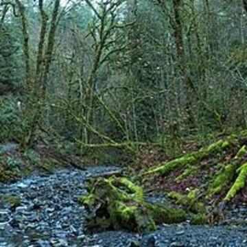 Goldstream Provincial Park - British Columbia - Canada Collection