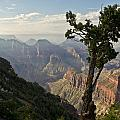 Grand Canyon Arizona Collection