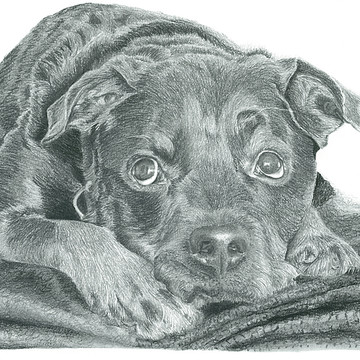 Graphite Dog Portraits Collection