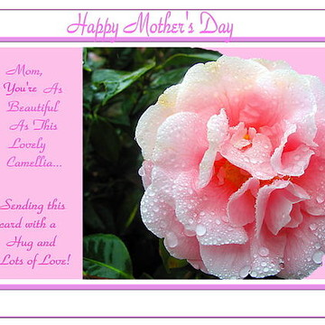 Greeting Cards Gallery Collection