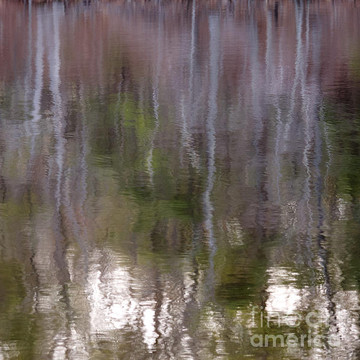 Hanging trees series Collection