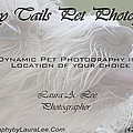 Happy Tails Pet Photography Collection