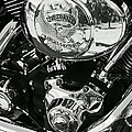 Harley Davidson Bike  Collection