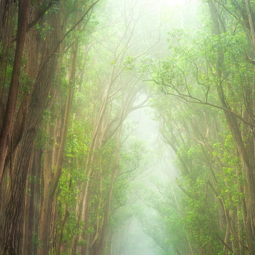 Hawaiian Landscape Collection