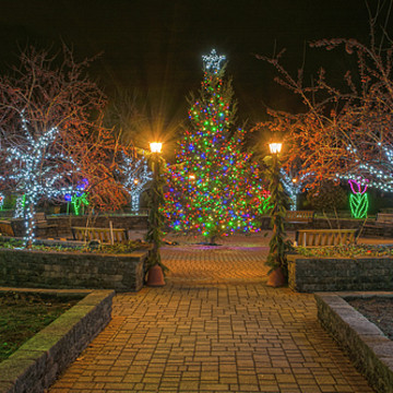 Holiday Lights in Bloom at the Orange County Arboretum Collection