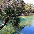 Homosassa Springs Collection