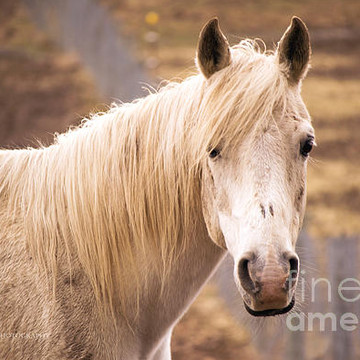 Horse aka Equus Collection