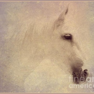 Horse Art by Mindy Bench Collection