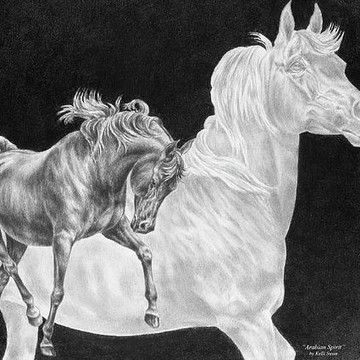 Horse Art in black and white Collection