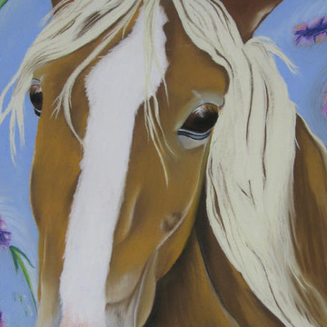 Horse Gallery Collection