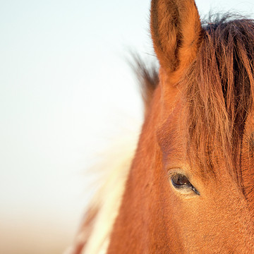 Horse Photography Collection