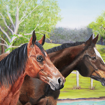 Horses Collection