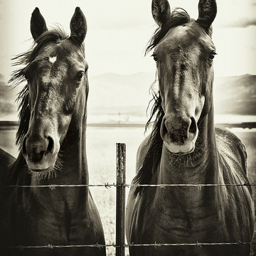Horses from the series Divine Love of the Equine Kind Collection