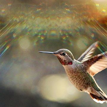 Hummingbird Heaven Collection