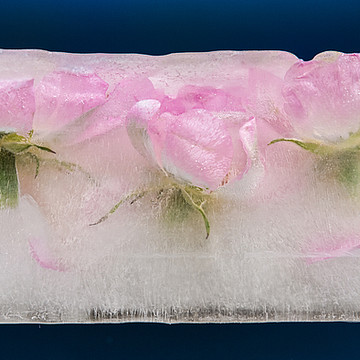 Ice and Flowers Collection