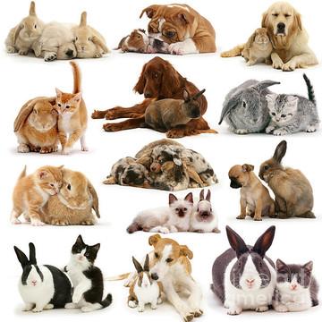 Identity Theft Animals