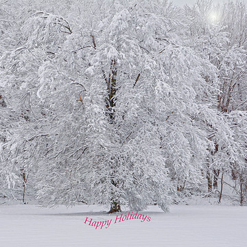 Images For Holiday Greeting Cards Coffee Mugs etc Collection