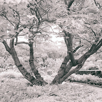 Infrared Imagery Collection