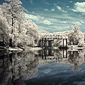 Infrared Photography Collection
