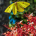 Insects and Butterflies Collection