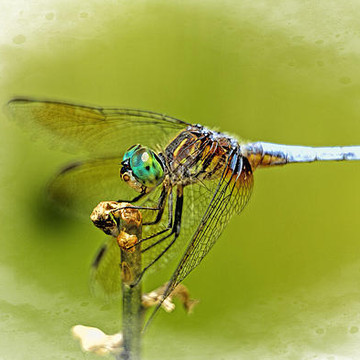 Insects - Dragon Flies - Butterflies - Praying Mantis Etc Collection