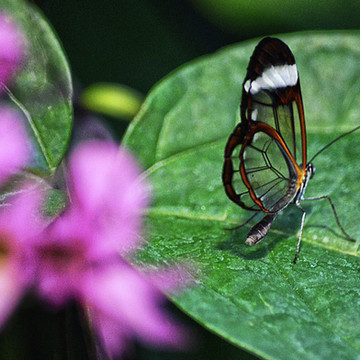 Invertebrates Collection