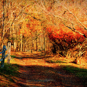 Ipswich river and Harold Parker in Autumn Collection