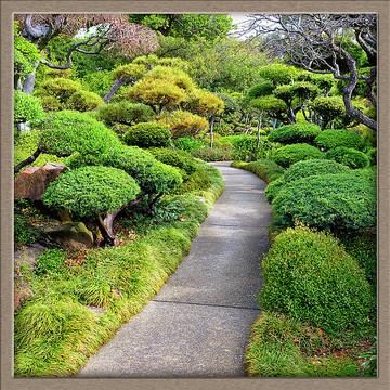 Japanese Garden Collection