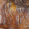 Jewel Cave National Monument Collection