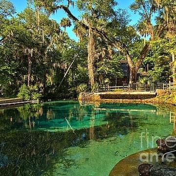 Juniper Springs - Florida Collection