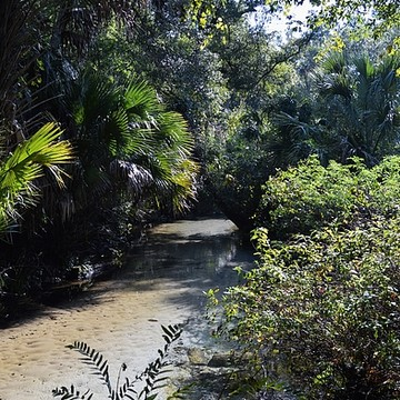 Juniper Springs Collection