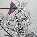 Kites Collection