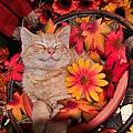 Kittens Calendar 2014 Collection