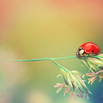 Ladybugs Collection