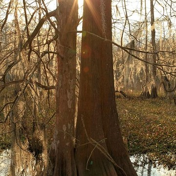 Lake Fausse Point State Park - Louisiana Collection