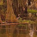 Lake Martin Louisiana Collection
