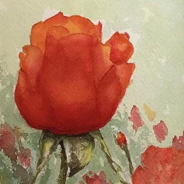 Landscape & Flowers Collection