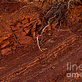 Landscape Abstracts Collection