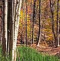 Landscapes - Maryland