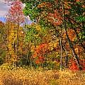 Landscapes - Pennsylvania