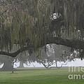 Landscapes in Fog Collection