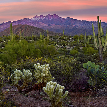 Landscapes with Cactus Collection
