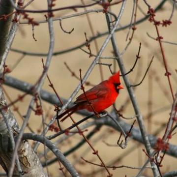 Le Aviare - Birds Collection